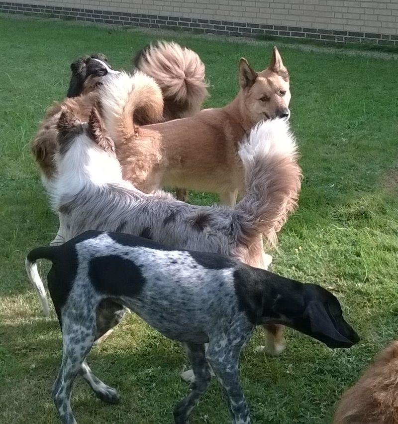 wat doen honden