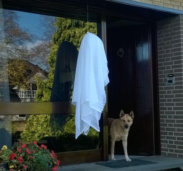 last-minute-halloween-versiering1