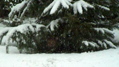 winterwonderlanf
