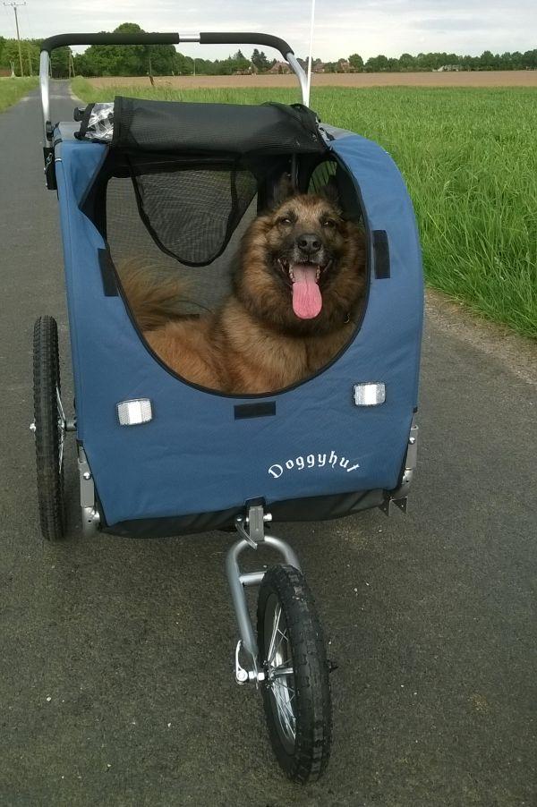 hondenkar grote hond