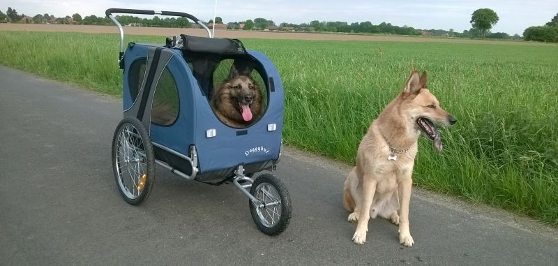 doggystroller grote hond
