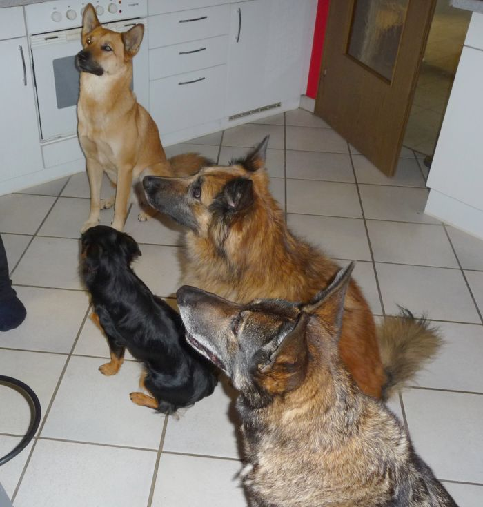 kleine-hondjes
