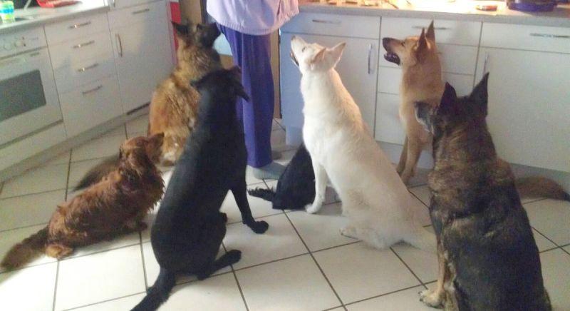kleine hondjes