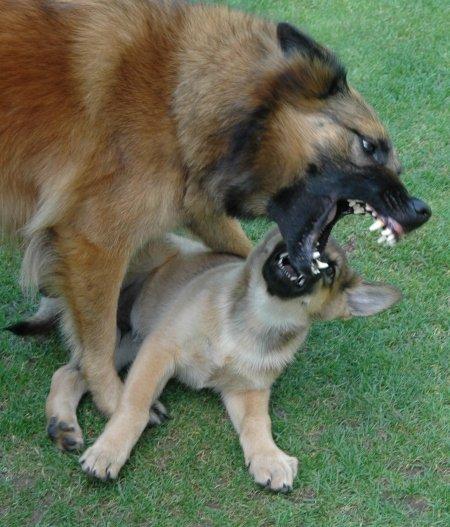 schattige-hondjes