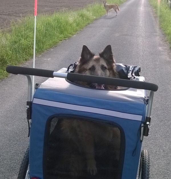 hondenwagen voor grote honden