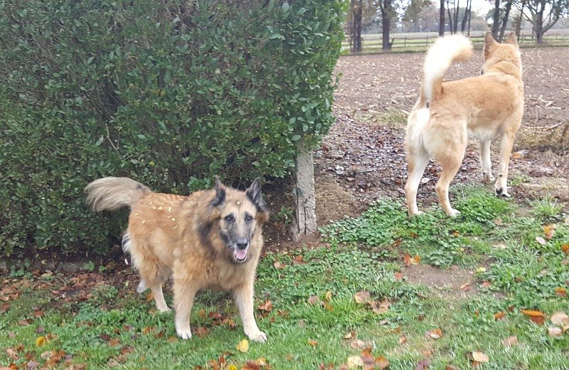 anabole steroïde hond ervaring
